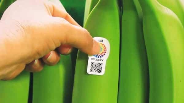 Banana Ambassador: campaña de códigos QR para promocionar el turismo en Ecuador